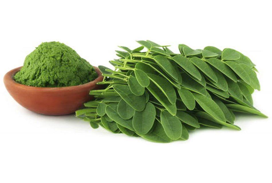 Moringa, con tracción de 90 nutrientes