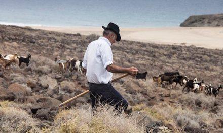 La apañada de Cofete congregará este sábado a unos 100 ganaderos de Fuerteventura y otras islas