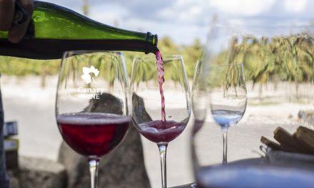 LA UNIVERSIDAD DE LA LAGUNA ACOGE A YCODEN DAUTE ISORA Y CANARY WINE