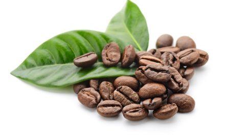 EL CABILDO DE LA PALMA QUIERE RECUPERAR EL CULTIVO DEL CAFÉ TRADICIONAL EN LA ISLA