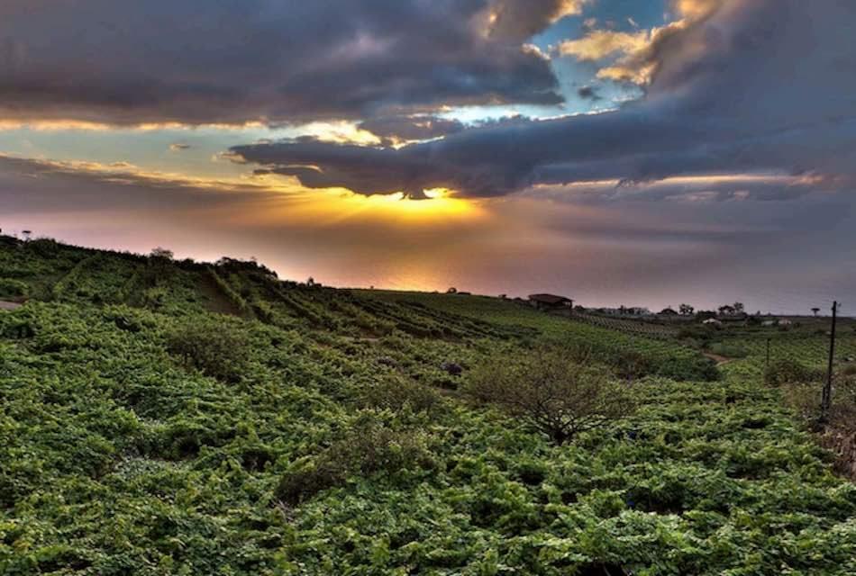 NACE UNA NUEVA PROPUESTA ENOTURÍSTICA EN TENERIFE: MONJE WINE&TOURS
