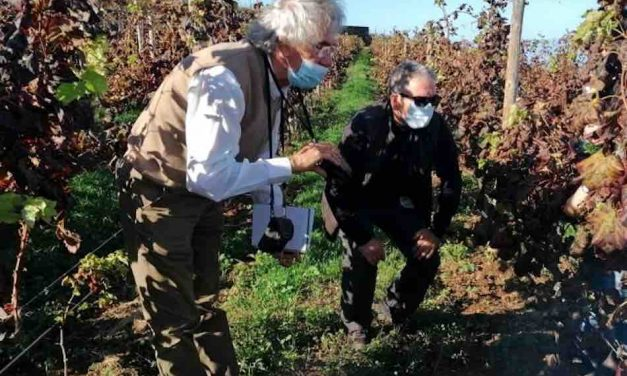 CANARY WINE PRESENTA UN ESTUDIO SOBRE LA VITICULTURA DE TENERIFE